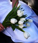 Wedding Photo Portfolio
