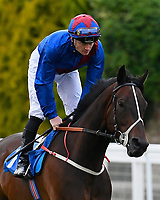 Cotton Club ridden by William Carson goes down to the start during Ladies Evening Racing at Salisbury Racecourse on 15th July 2017