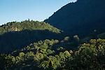 Ellholz, Wald, forest, Balzers, Rheintal, Rhine-valley, Liechtenstein.