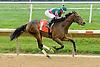 Bustle winning at Delaware Park on 10/4/12