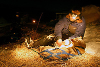 Randy Chappel Massages Dogs Feet at Ruby at Night<br /> 2004 Iditarod