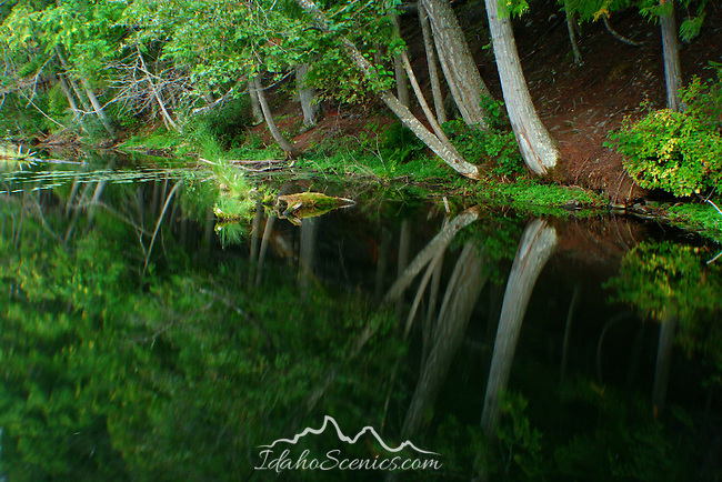 Shoreline trees refect in the calm evening waters of Robinson Lake, North Idaho