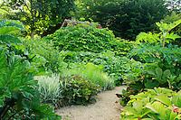 Jardins du pays d'Auge (mention obligatoire dans la légende ou le crédit photo):.autour du bassin massifs de plantes à grandes feuilles avec Gunnera manicata, Rodgersia aesculifolia, Petasites, berce du Caucase (Heracleum Mantegazzianum).