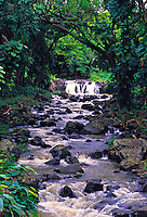A small waterfall and bubbling stream studded with rocks under a canopy of trees is a glimpse of natural Hawaii.