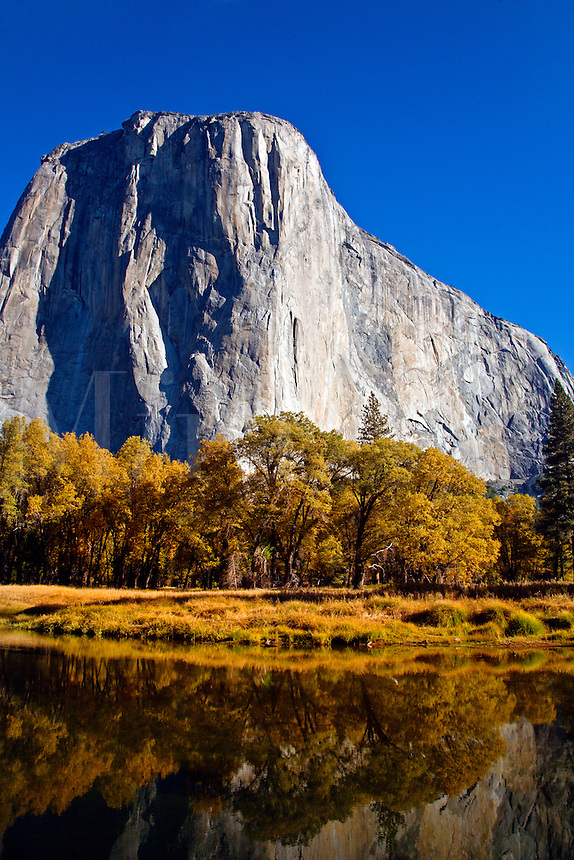 EL CAPITAN rises above the MERCED RIVER during autumn - YOSEMITE NATIONAL PARK, CALIFORNIA