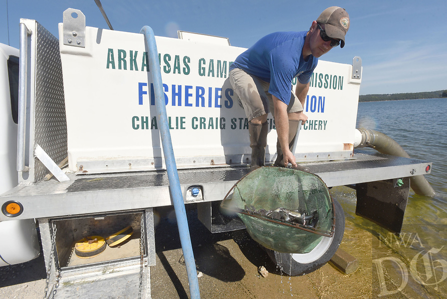 NWA Democrat-Gazette/FLIP PUTTHOFF<br />Parker Ring with the Arkansas Game and Fish Commission shows catfish with clipped fins        August 2017    that he's stocking at Beaver Lake at the Arkansas 12 bridge.