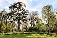 France, Loir-et-Cher (41), Cheverny, château et jardin de Cheverny en avril, le jardin des apprentis, cèdre, tilleuls et tulipes