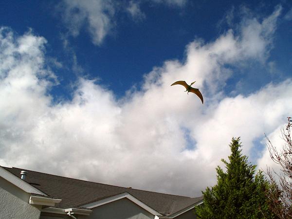 Giant bird, pterodactyl