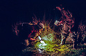 Researchers spotlighting for Green and Golden Bell Frogs at night in reeds, Broughton Island, Myall Lakes National Park, New South Wales