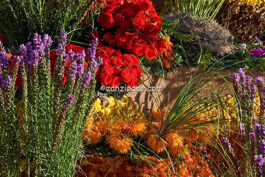 """New Mexico, """"Enchantment in the Air"""" colorful, Flowers Orange Spider Daisy, Lavender, Red Roses"""