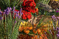 "New Mexico, ""Enchantment in the Air"" colorful, Flowers Orange Spider Daisy, Lavender, Red Roses"