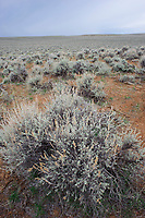Sagebrush shrub-steppe habitat. Freemont County, Wyoming. April.