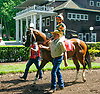 Indian Lover at Delaware Park on 6/15/17