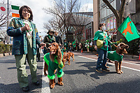 "Irish Setters and their owners at the 27th Saint .Patrick's Day Parade in Omotesando, Tokyo, Japan. Sunday March 17th 2019. Started in 1992 by the Irish Network, Japan, and supported by the Embassy of Ireland,; the parade, along with the ""I Love Ireland Festival"" held nearby is Asia's  largest Irish event."