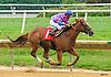 Mirkamurka winning at Delaware Park on 8/10/16