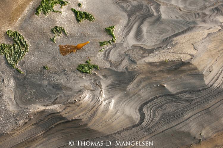 Kelp lies on the beach in La Jolla, California.