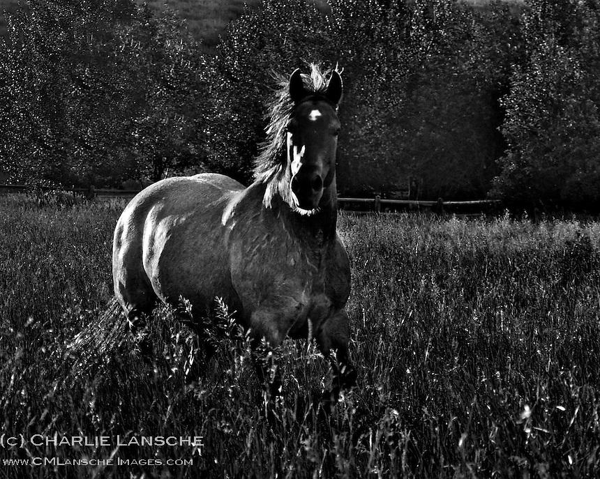 Horse next door.