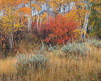 Grand Teton National Park, Wyoming:<br /> Russet colors of fall, aspen grove and sage, grass meadow