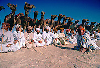 Bedouins with their camels in the desert at Al Ain, Abu Dhabi, United Arab Emirates. RESERVED USE - NOT FOR DOWNLOAD -  FOR USE CONTACT TIM GRAHAM