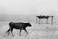 - Villaggio albanese, Queparo (Cepar&ograve;, agosto 1993); la spiaggia<br /> <br /> -  Albanian  Village, Queparo (Cepar&ograve;, August 1993); the beach
