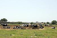 Bestiame al pascolo in Puglia.<br /> Livestock grazing in Puglia.<br /> UPDATE IMAGES PRESS/Riccardo De Luca