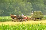Amish man and woman baling hay with horses and baler. Nippenose Valley.