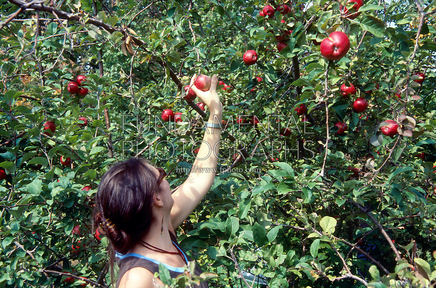 FRUITING APPLE TREES<br />