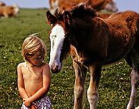 Uneasy relationship between child, age 3, and Clydesdale foal.
