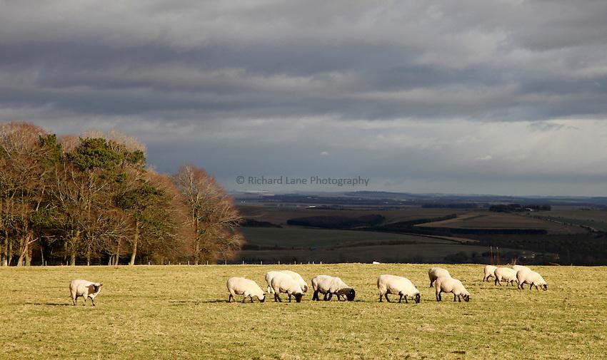 Photo: Richard Lane/Richard Lane Photography. Winter landscapes, Salisbury, Wiltshire. 07/12/2012.