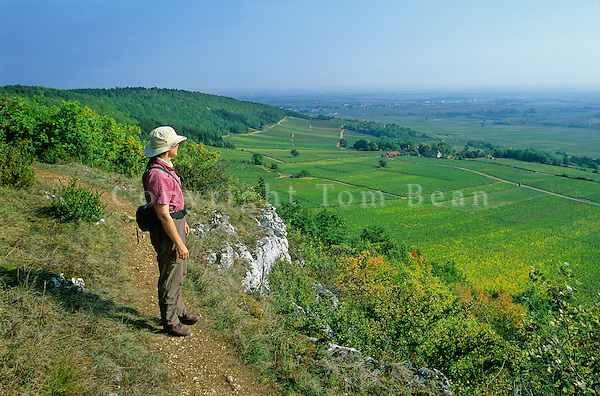 Hiker on footpath above village of Puligny-Montrachet in the Cotes de Beaune, wine region, Puligny-Montrachet, Burgundy, France, AGPix_0373.