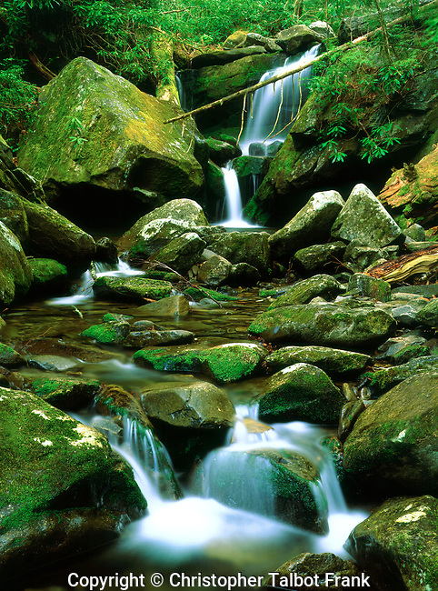 USA; Tennessee; A moss covered stream in The Great Smoky Mountains