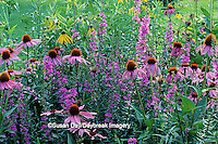 63821-04208 Perennial butterfly hummingbird garden Purple & Prairie Coneflowers and Lythrum   IL