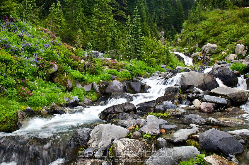 Paradise, Mount Rainier, Washington.