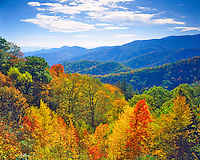 First Fall Colors, Great Smoky Mountains National Park, Southern Appalachians, Newfound Gap, North Carolina