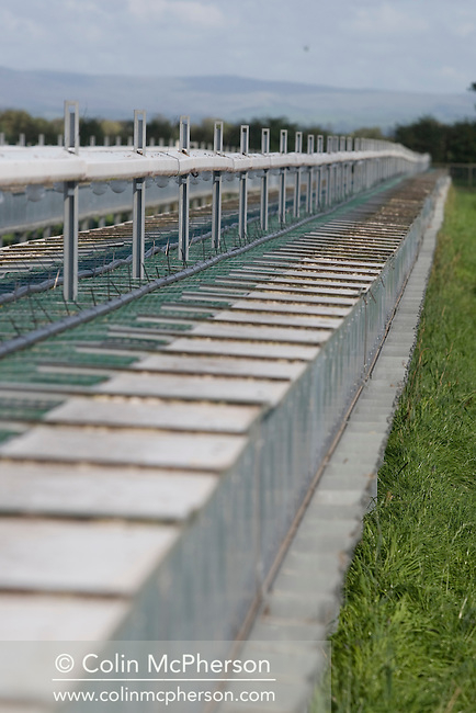 Raised cage laying units housing breeding and maturing partridges at Hy-Fly Hatcheries, a company based in Preesall, near Blackpool, Lancashire which specialises in breeding partridge and pheasant to be sold to sporting estates. The partridges are kept in small cages for up to three years while they mature before being sold. Pheasants are also kept in cages but are transferred to outdoor pens as they mature. The company, which is owned by Ray Holden, produces around three million day-old chicks per year.