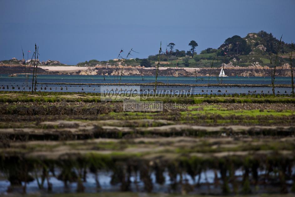 Europe/France/Bretagne/22/Côtes d'Armor/ Paimpol: Parcs à huîtres , voilier et Ile Riom au fond