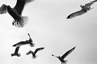 Seagulls, Ilford Delta Film  2020