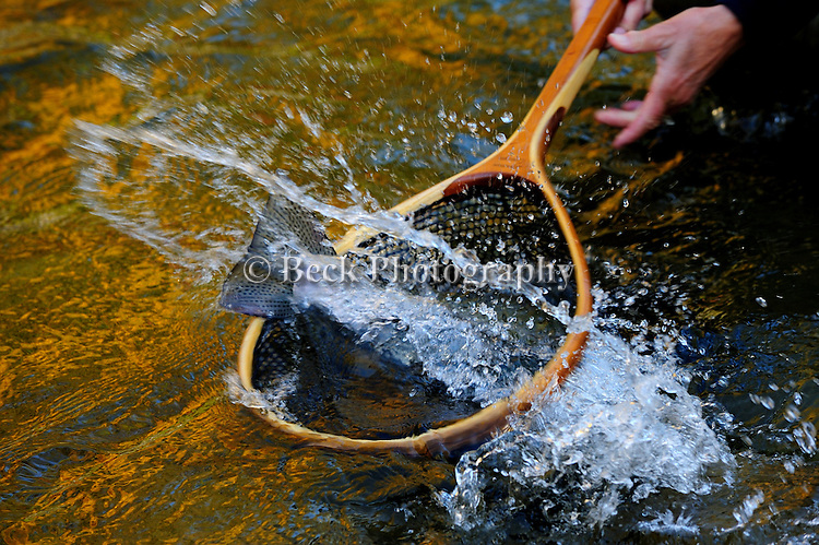 STEELHEAD FLY FISHING IN ERIE