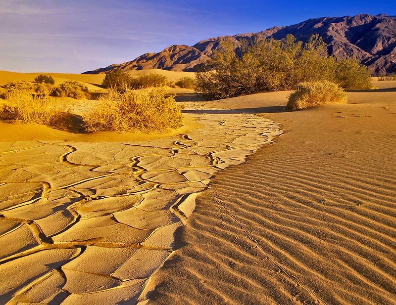 Dried mud pattern animal tracks and Paniment Mountains. Death Valley National Park, California