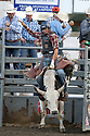 20 Aug 2014: A.J. Hamre riding the bull Jackpot was not able to score during the first round of the Seminole Hard Rock Extreme Bulls competition at the Kitsap County Stampede in Bremerton, Washington.