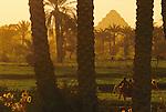 Step Pyramid; Djoser; Saqqara; Sakkara; Egypt