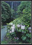 KS 006.  Multnomah Falls.  5x7 postcard. Nature's Design