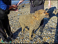 BNPS.co.uk (01202 558833)<br /> Pic: Maritime&amp;CoastguardAgency/BNPS<br /> <br /> ***Must use full byline***<br /> <br /> The dog who got stuck in the mud.<br /> <br /> This is the terrifying moment a woman got stuck waist-deep in a mudslide while walking her dogs along the British coast.<br /> <br /> The woman had been walking near Reculver in Herne Bay Kent, when she got stuck and had to be pulled free by firefighters.<br /> <br /> Amazingly, just hours later two women had to be dragged free from the mud after getting stuck in exactly the same spot.<br /> <br /> It is thought they had waded into the mud slip to rescue their pet.