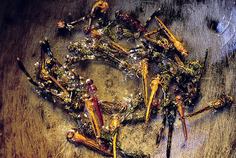 Dragonflies, de-winged, salted, and fried in coconut oil, Bali, Indonesia.(Man Eating Bugs page 60 Bottom)