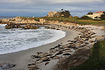 Harbor seals near Hopkins Marine Lab