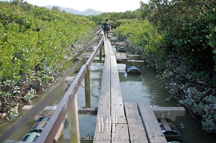 Hong Kong, Mai Po WWF reserve birds  Floating boardwalks and paths lead birders and photographers to restricted blinds or hids where brids can be observed. The reserve is fenced and guarded with CCTV cameras, in part because it borders on the boundary with mainland China and is a popular smuggling route.