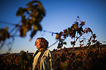 BAJA CALIFORNIA - NOVEMBER 25, 2013:  Natalia Badan, owner of the Mogor Badan winery, poses for a portrait in her Valle de Guadalupe vineyard. Badan, a lifelong resident of the valley, and others in Mexico's wine country are protesting the mayor's relaxing of zoning regulations they say will lead to a drastic change in the culture of  the popular tourist destination.  CREDIT: Max Whittaker for The New York Times