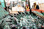 Le jack Abry II est spécialisé dans les espèces de grands fonds : siki, lingue, chimère etc... A Chaque remontée, les pêcheurs ramènent entre 3 et 10 tonnes de poissons.