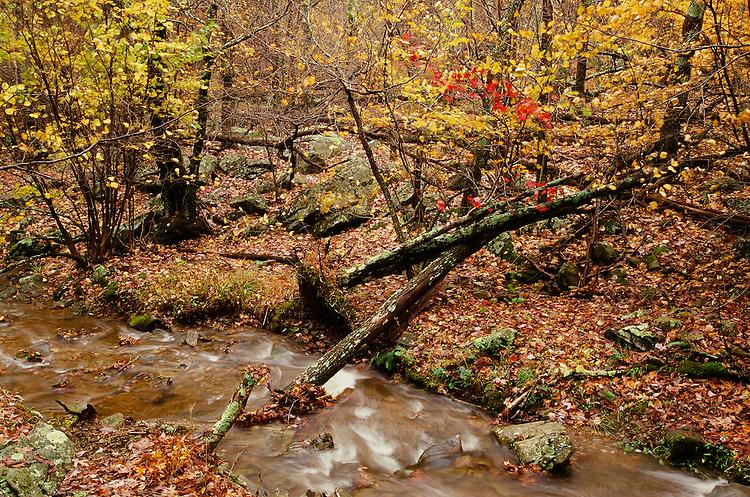 Creek, Shenandoah NP, VA   35mm image on Fuji Velvia film