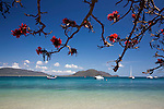 Poinciana flowers overlooking the clear waters of Welcome Bay.  Fitzroy Island National Park, Cairns, Queensland, Austtralia